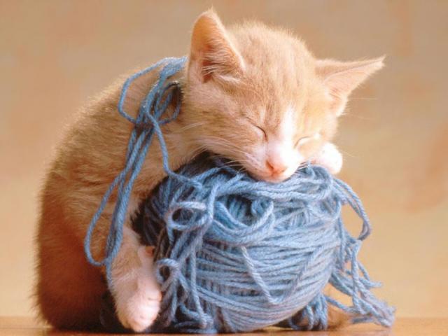 А что снится рыжей кошке?