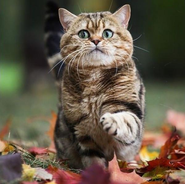 Как кота назовешь... Так его и ругай
