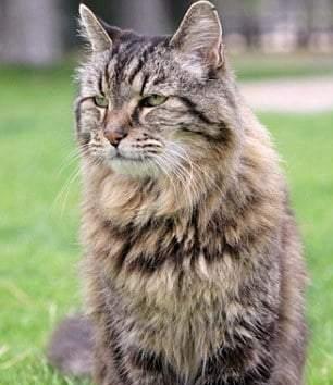 Стареющий кот