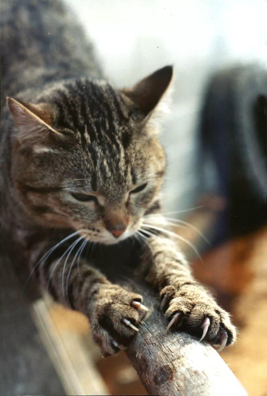 Что сделать для кошек своими руками фото 66