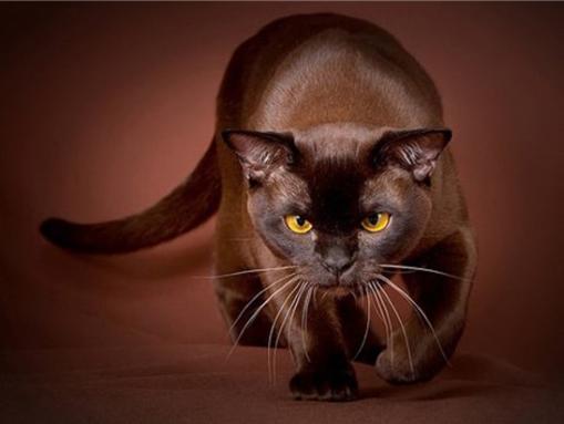Кошки и мифы