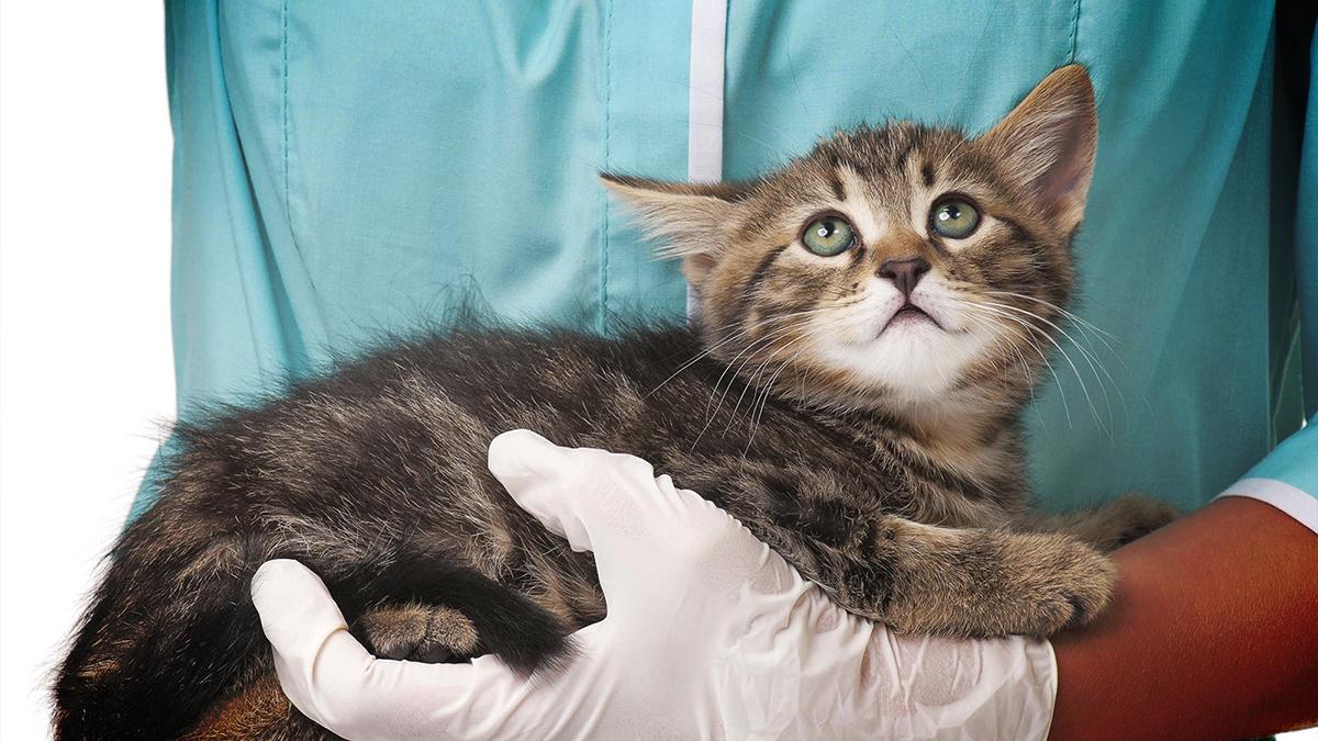 отравление котят от глистов