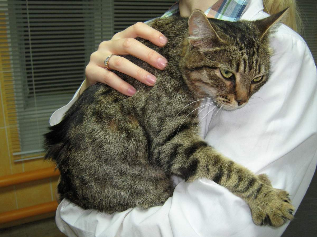 заболевание почек у кошки москвы, девочки