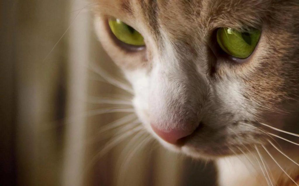 Домашних животных необходимо вакцинировать