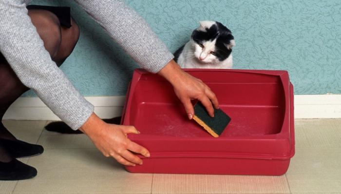 Почему кошки начинают гадить в неположенном месте