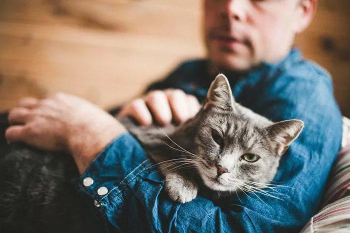 Стерилизация успокоит кошачий нрав