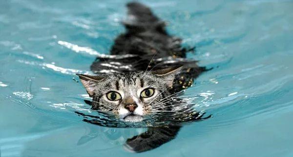 Любовь к воде - редкая роскошь