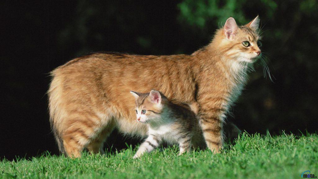 Котята помогают избежать мастита