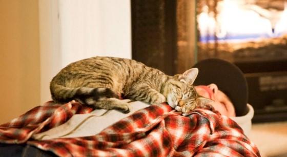 кошки спят на людях