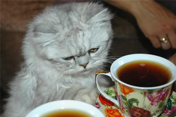 Чай - народное средство против воспаления