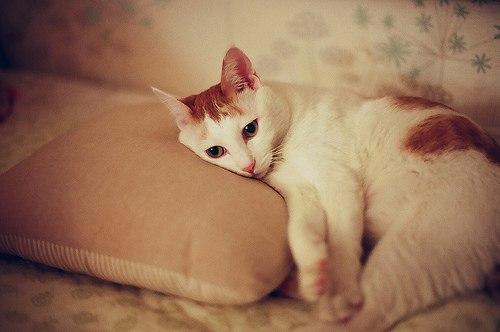 Не кормите больную кошку до постановки диагноза