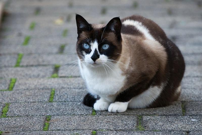 кошка на прогулке