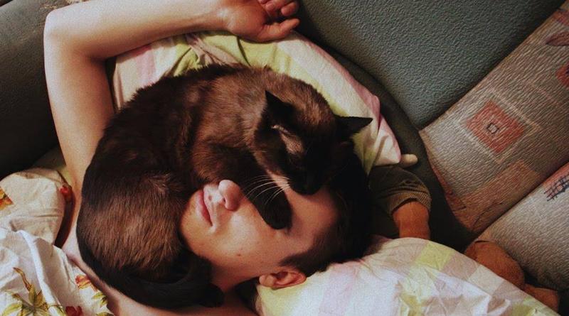 Почему кошка спит на человеке на животе