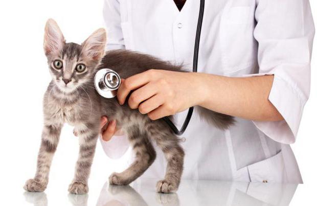 ветеринар и кот