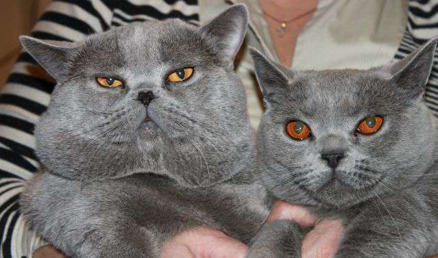 Слева - кот, справа - кошка