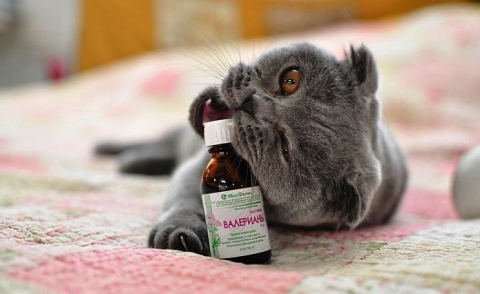 котик пьет валерьянку