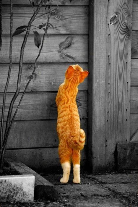 обнюхивание котом територии