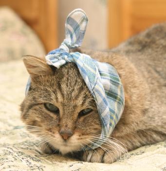 Больной кот
