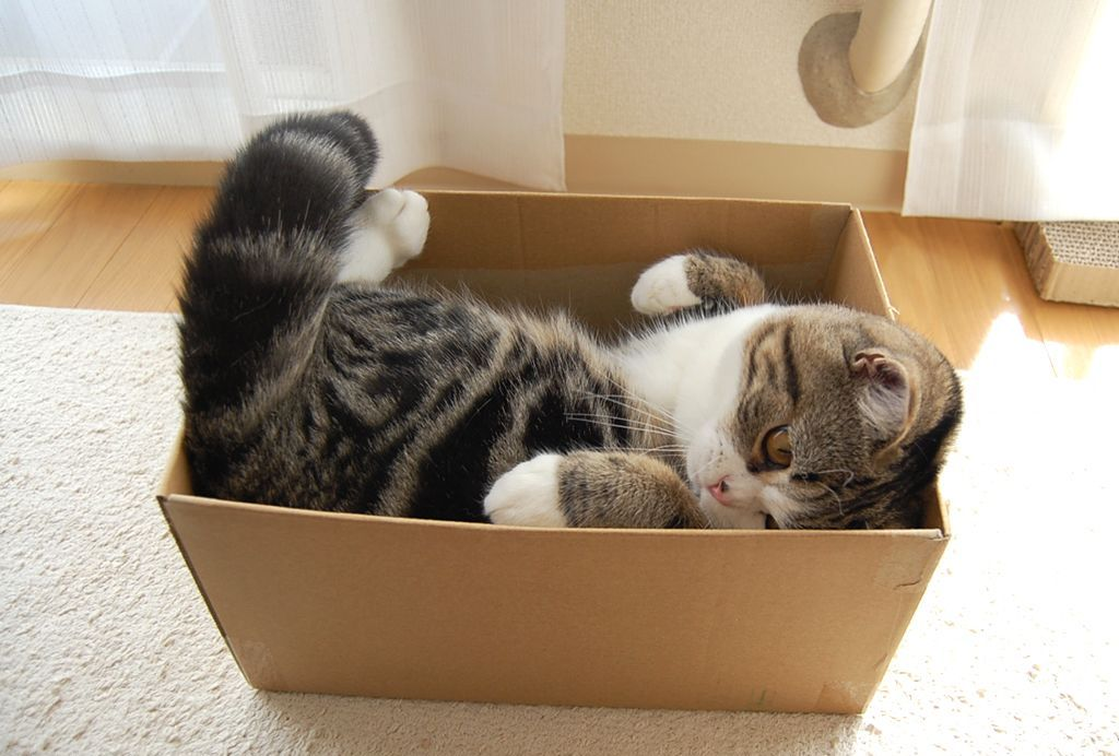Кошки в добрые руки белгород фото этом районе