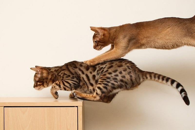 Отличные прыгуны