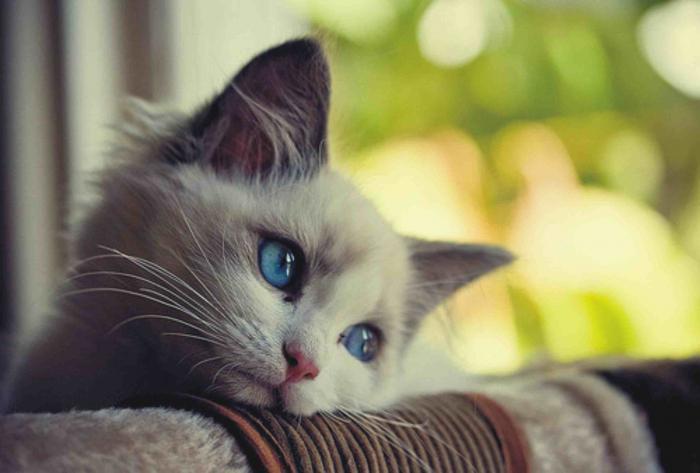 Острая почечная недостаточность у кошек