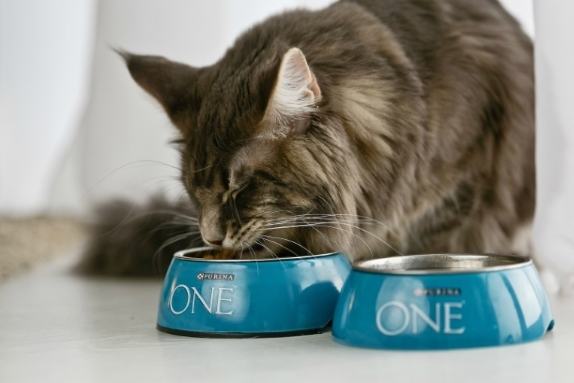Корм Purina One для кошек