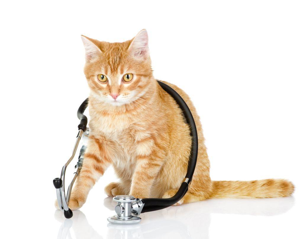 Острая и хроническая почечная недостаточность у кошек