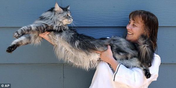 Самый длинный кот Cтюи