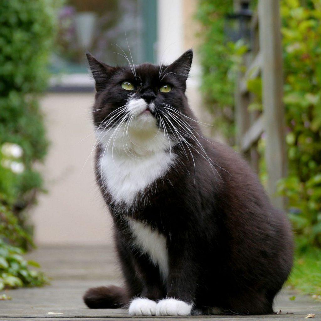 Рацион кошки после операции требует особого внимания