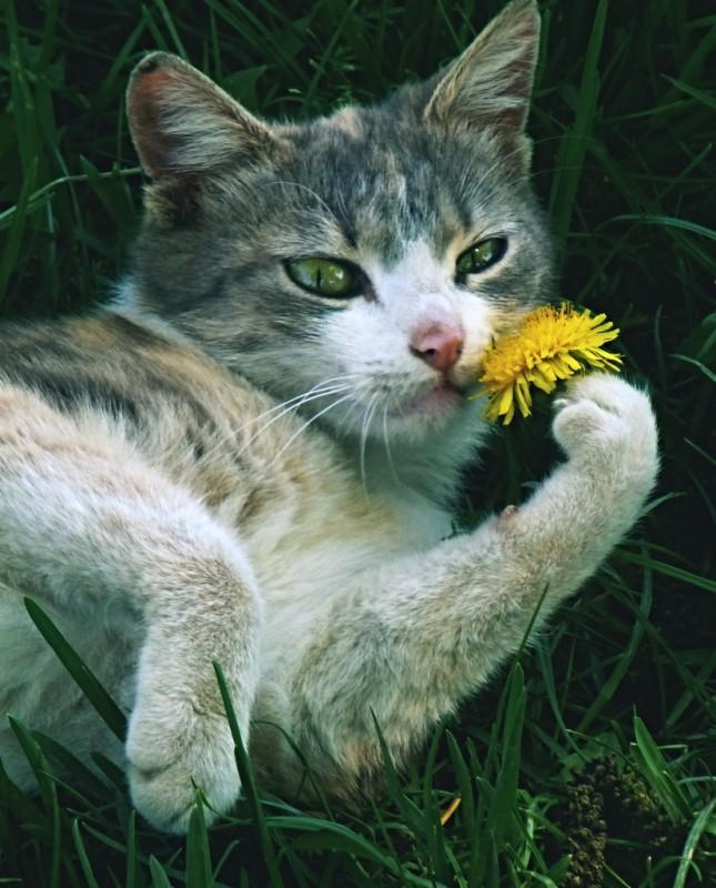 Кошка не стремится к материнству