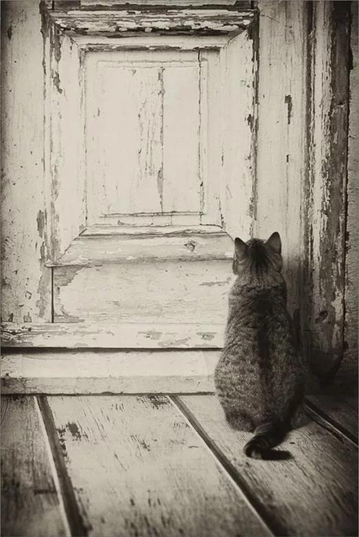 Смотрит на дверь