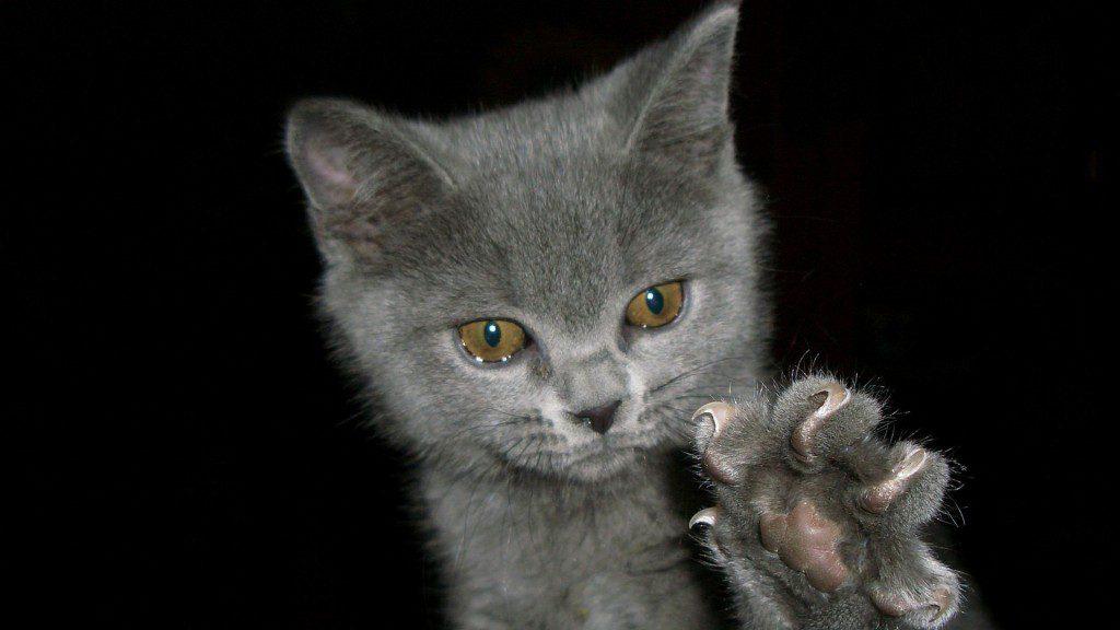 Оставьте кошке когти