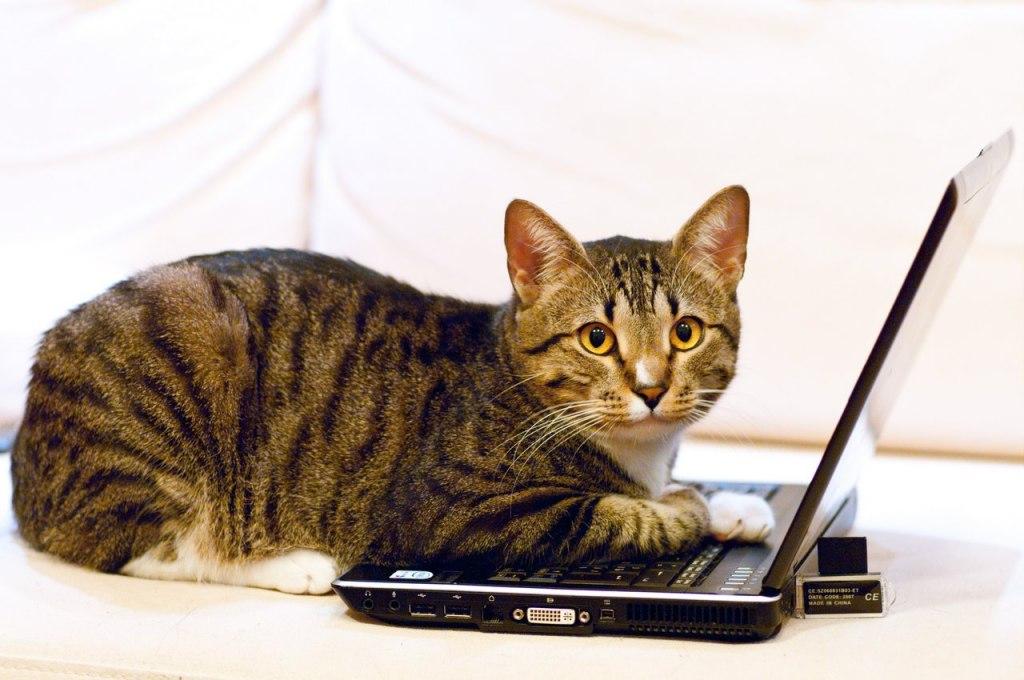 картинки умных кошек клуб