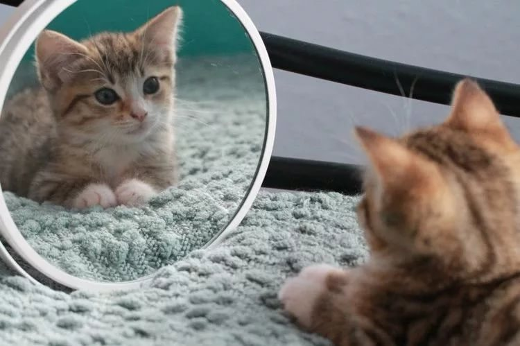 зеркало и кот