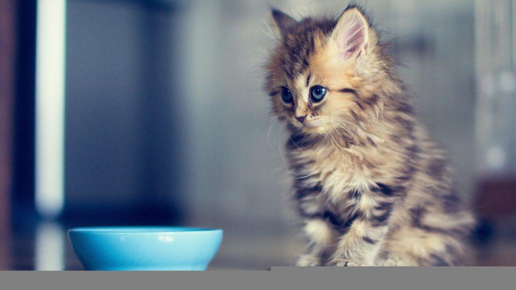 Кормите котика качественно