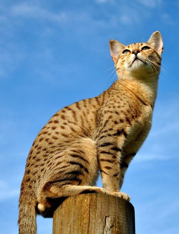 Важной кошке - важный корм