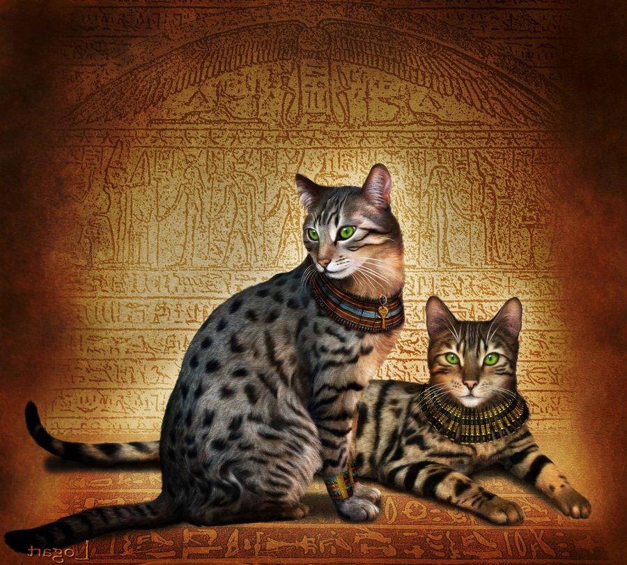 Египетская мау