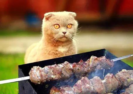 Кошкам нельзя жаренное