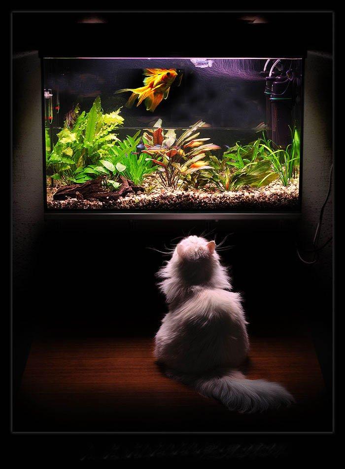 аквариум и кошка