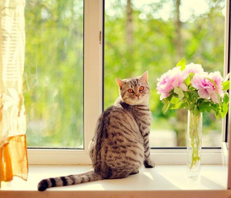 Домашние кошки находятся в группе риска