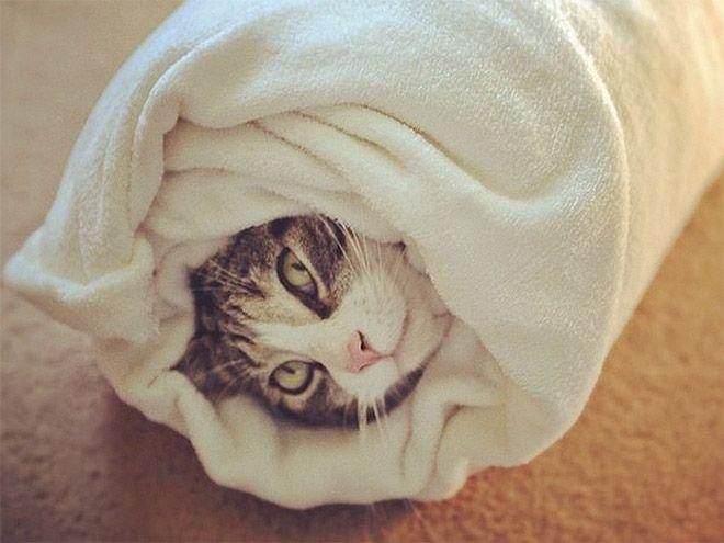 обезвреженная кошка