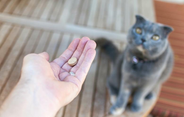таблетка для кота