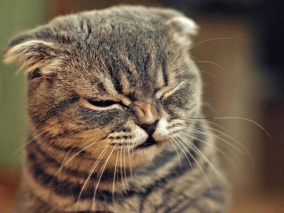 кот запах
