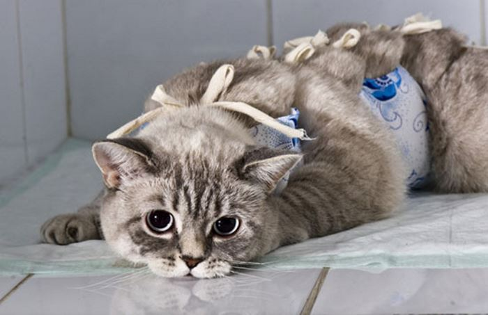 Через сколько времени кошка выходит из наркоза thumbnail