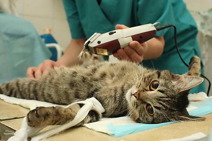 Сколько кошки отходят от наркоза