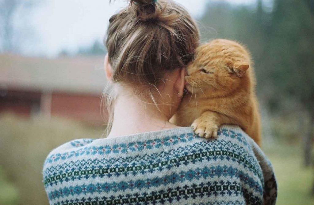 кошачье внимание