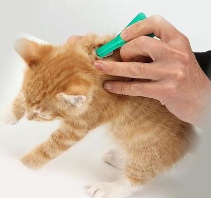 лечение кота от блох